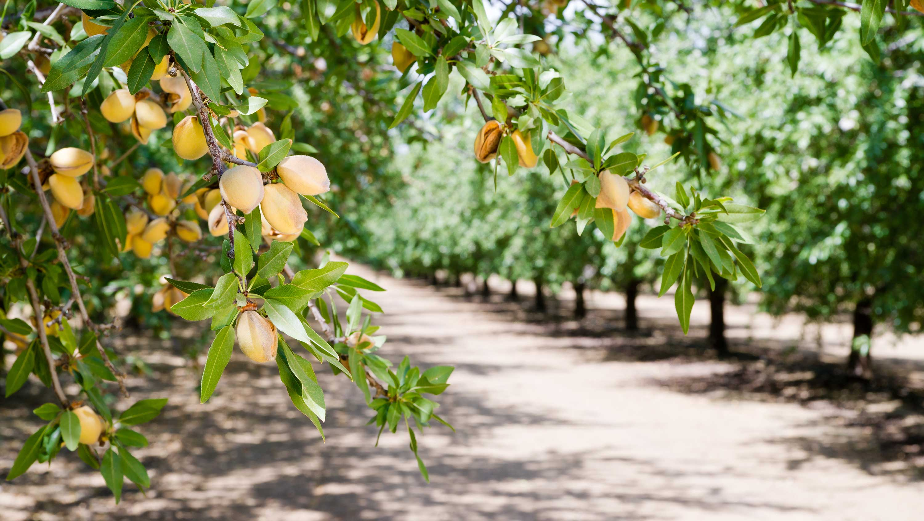 eat well, live well almond tree